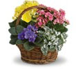 Spring Has Sprung Mixed Basket Flowers